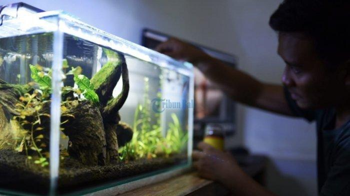 Akuarium aquascape.