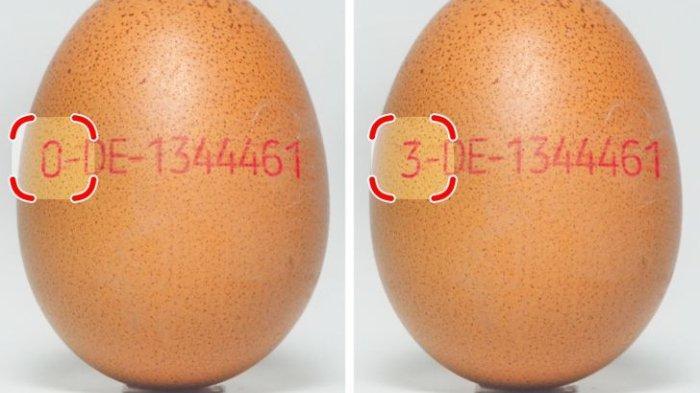 Arti Angka di Cangkang Telur hingga Warna Bulu Sikat Gigi, Ini 5 Trik yang Tak Banyak Orang Ketahui