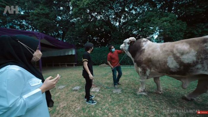 Atta Halilintar berhasil kabulkan permintaan Aurel Hermansyah soal sapi dengan berat 1,4 ton.