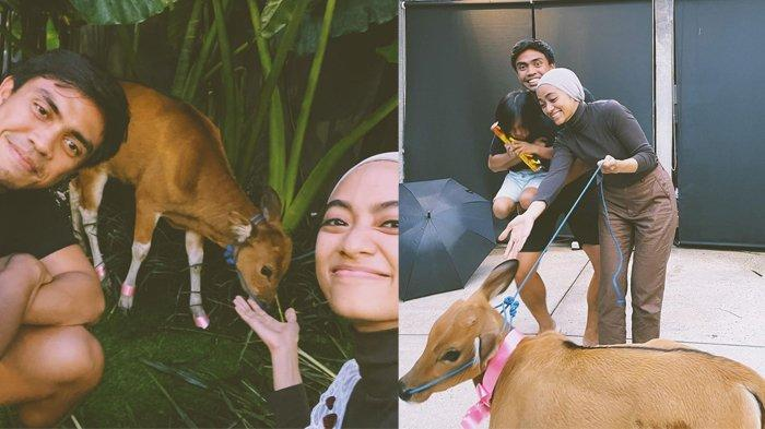 Dihadiahi Ditto Sapi di Ultah ke-31, Ayudia Girang Sambut Anggota Keluarga Baru, 'Best Present Ever'