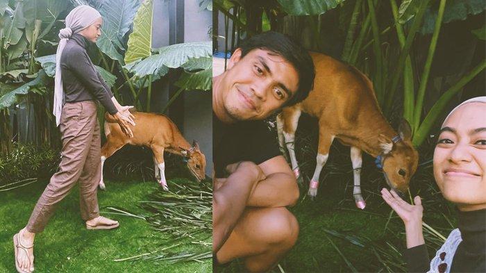 Bahagianya Ayudia dihadiahi Dito Percussion anak sapi di ulang tahun ke-31