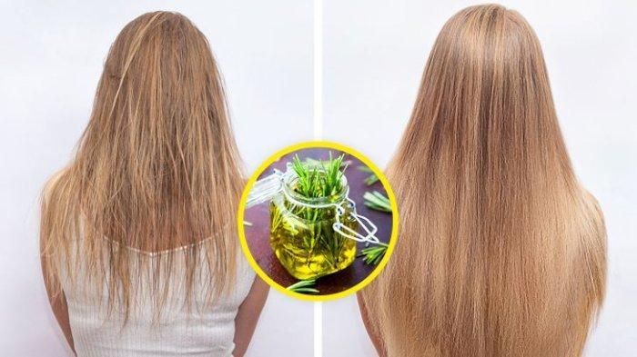 5 Bahan Alami Ini Manjur untuk Merangsang Pertumbuhan & Ketebalan Rambut, Tak Perlu Khawatir Botak