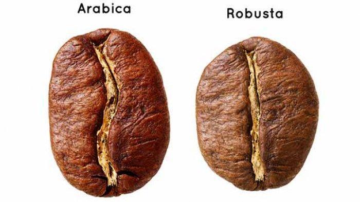 Berikut 4 Perbedaan Kopi Robusta dan Arabika, dari Bentuk Biji hingga Rasanya