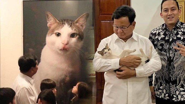 Inilah Bobby, Kucing Prabowo yang Ikut Menengok Sandiaga, Punya 49 Ribu Pengikut di Instagram
