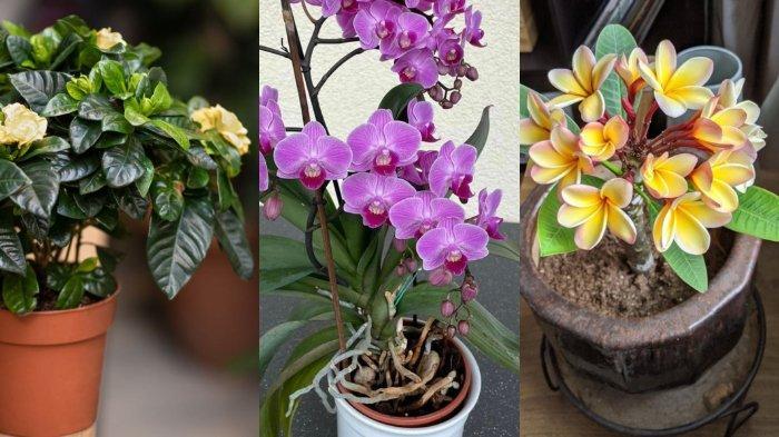 5 Tanaman Bunga Dalam Ruangan yang Bisa Memberi Bau Semerbak Wangi