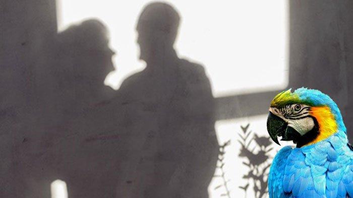 POPULER Berkat Kicauan Burung Beo, Wanita Ini Bongkar Perselingkuhan Suami & Asisten Rumah Tangga