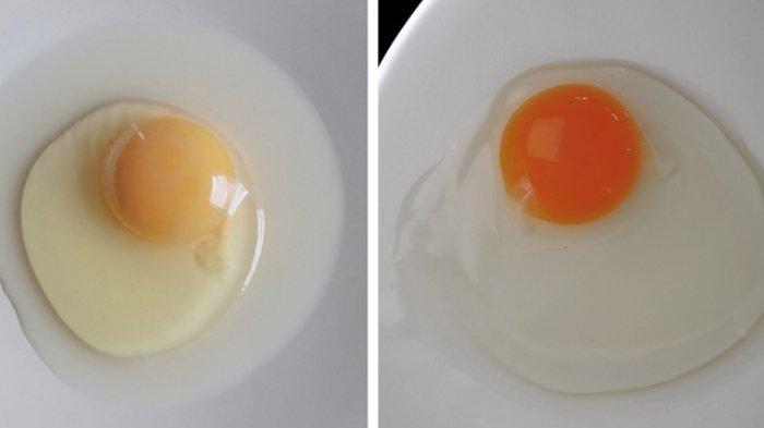 Bikin Salah Kaprah, 8 Mitos Tentang Telur Ini Tak Perlu Kamu Percayai