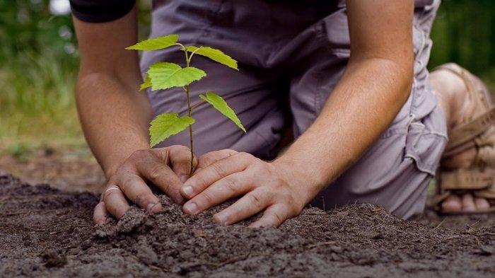 Hari Lingkungan Hidup Sedunia Diperingati Setiap 5 Juni, Simak Sejarah dan Gagasan di Baliknya