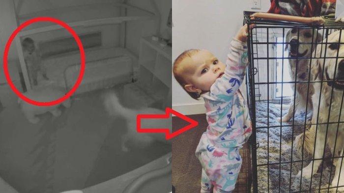 Setiap Jam 6 Pagi, Bayi 15 Bulan Bisa Keluar Kamar yang Ditutup Rapat, CCTV Ungkap Misterinya