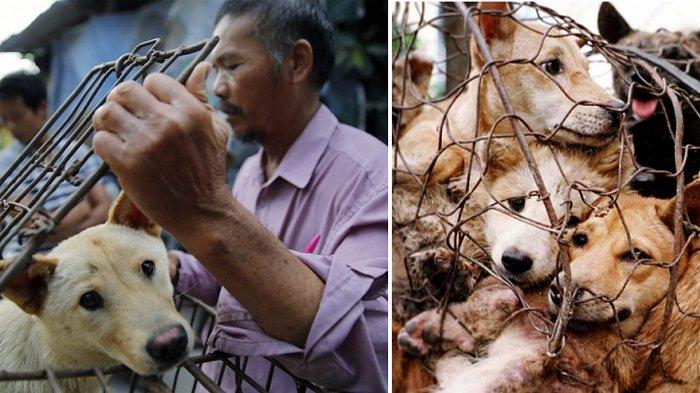 Media Luar Negeri Soroti Kalangan Warga Indonesia yang Mengkonsumi Daging Anjing, Ini Alasannya!