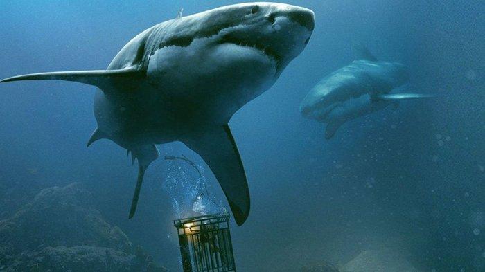 Film 47 Meters Down tayang malam ini di Bioskop Trans TV.