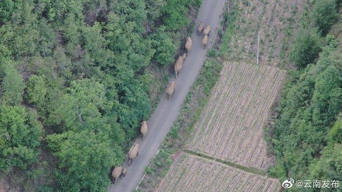 POPULER Gajah vs Manusia, 150 Ribu Warga Direlokasi, 25 Ribu Polisi Dikerahkan Agar Tidak Bentrok