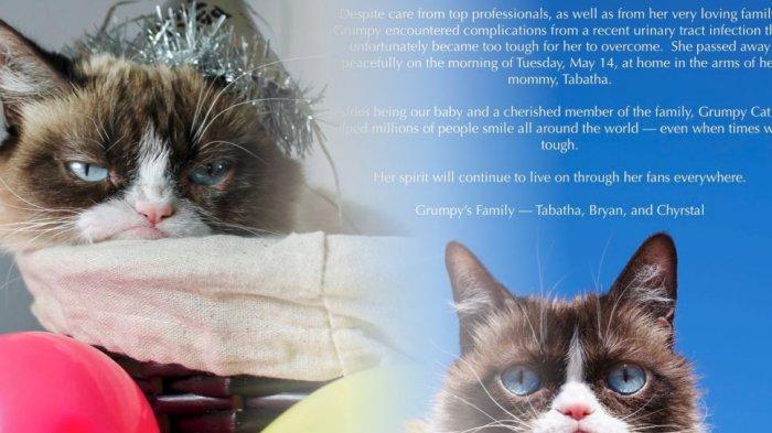 Grumpy Cat Kucing Selebgram Mati, Ini 5 Fakta Terbarunya Sakit yang Diderita Hingga Warisan Kekayaan