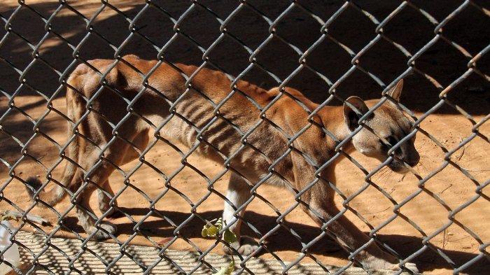Hewan di Kebun Binatang Venezuela Saling Makan karena Kelaparan, Dampak Krisis Hebat, Begini Fotonya