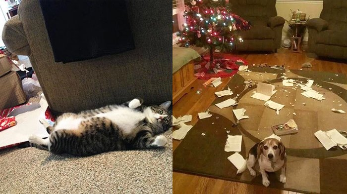 Kamu Tak Akan Bisa Marah Jika Lihat 15 Hewan Ini Hancurkan Natal dengan Cara yang Gemas!