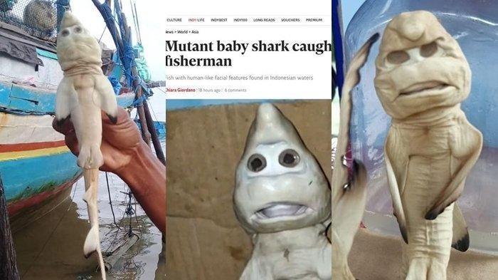 BUAT Media Asing Ikut Heboh, Lihat Wujud Hiu Berwajah Manusia yang Ditemukan di Perairan Indonesia
