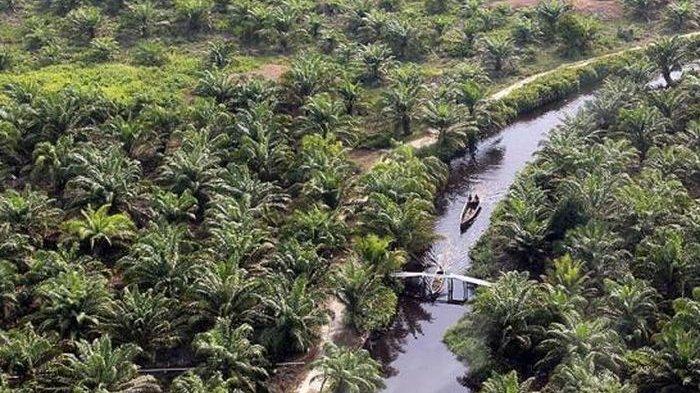 Indonesia Jadi Salah Satu Penghasil Kelapa Sawit Terbesar Dunia, Daftar Perkebunannya di Nusantara