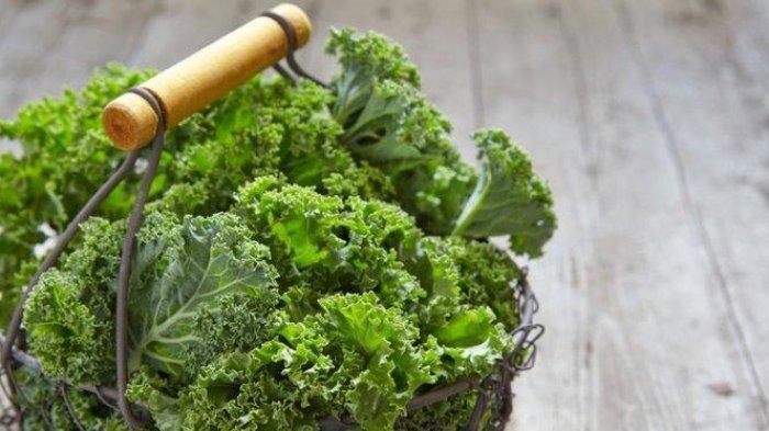 Bisa Menyehatkan Mata, Ini 5 Manfaat Mengonsumsi Sayuran Kale bagi Kesehatan Tubuh