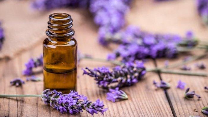 Ilustrasi minyak lavender.