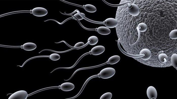 Draf RUU Ketahanan Keluarga Ancam Pidana 5 Tahun Penjara bagi Pendonor Sperma atau Ovum