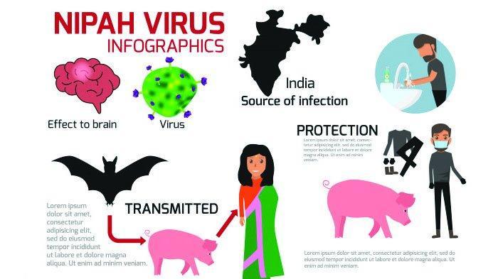 Ilustrasi Infografis Virus Nipah