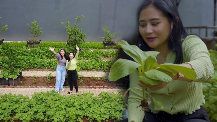 Intip 5 Potret Kebun Organik Milik Prilly Latuconsina, Sayuran Tinggal Petik Tak Perlu ke Pasar