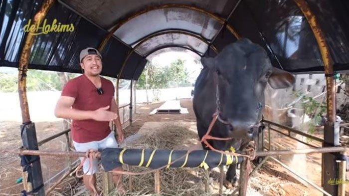 Irfan Hakim tolak tawaran Atta Halilintar yang ingin membeli sapinya yang memiliki berat 1,3 ton.