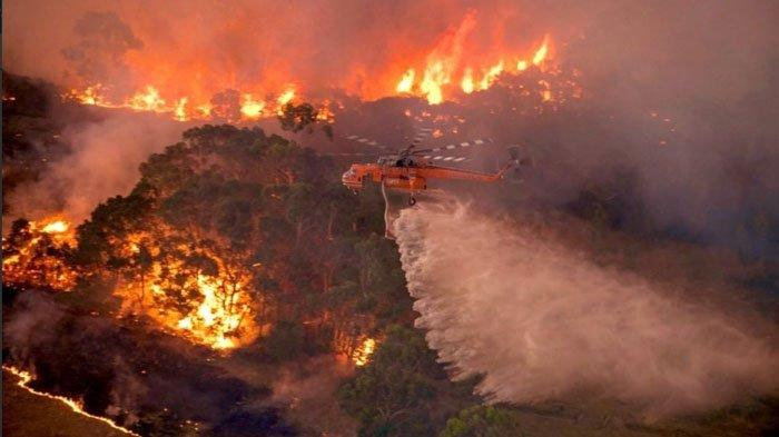 5 Fakta Kebakaran Hutan Australia, Update Jumlah Korban hingga Bantuan dari Artis Hollywood