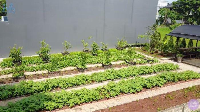 Kebun organik milik Prilly Latuconsina.
