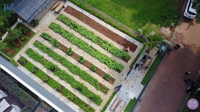 Kebun sayur organik milik Prilly Latuconsina.