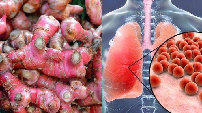 Waspada Virus Corona Sudah Masuk Indonesia, Terungkap Pentingnya Jahe Merah, Simak Cara Sajinya Ini