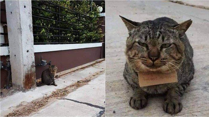 Kucing abu-abu yang viral karena bawa tagihan utang