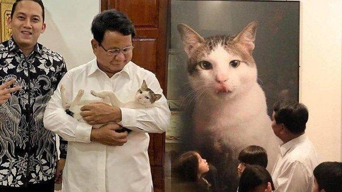 Ini Bobby, Kucing Prabowo Subianto yang Ikut Menengok Sandiaga, Punya 49 Ribu Pengikut di Instagram