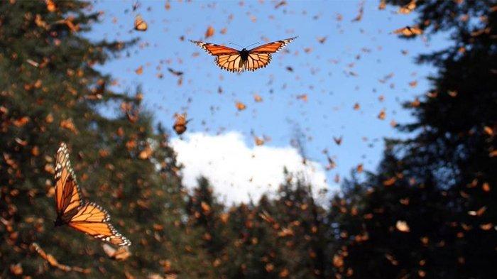 Simbol Kupu-kupu dalam Feng Shui, Bisa Mendatangkan Cinta dan Transformasi Dalam Hidup