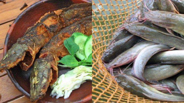 4 Cara Membersihkan Lendir Ikan Lele dan Kumpulan Resep Memasak Lele Jadi Makanan Lezat di Rumah
