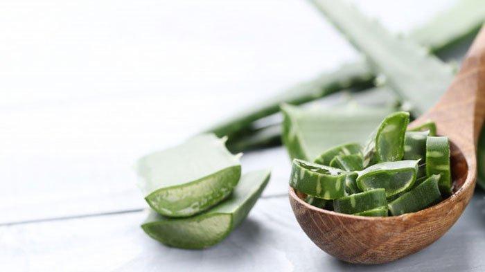 Lidah buaya atau aloe vera untuk jerawat