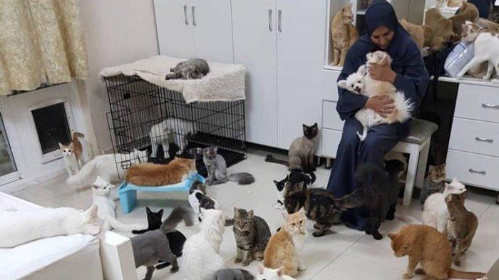 Maryam dan kucing-kucingnya