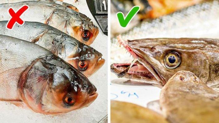 Waspada saat Beli Ikan! Perhatikan 6 Tanda Peringatan Ini: Pertimbangkan Warna Daging