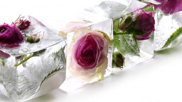 Mawar untuk kecantikan
