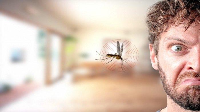 Penyebab Nyamuk Sering Berdengung di Dekat Telinga, Begini Cara Menghindarinya