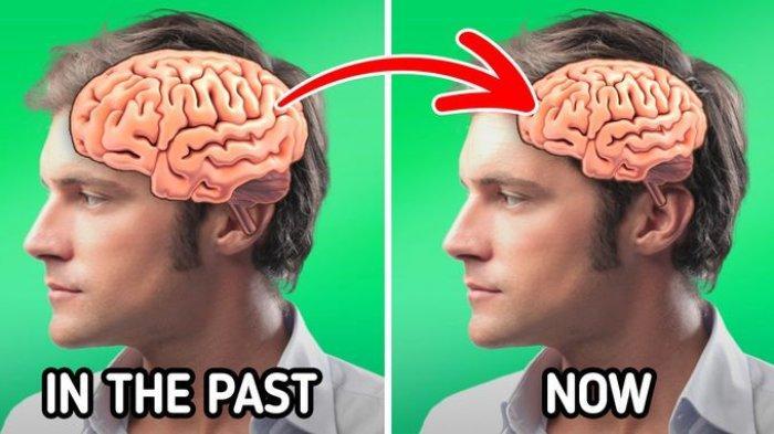 5 Bukti Perubahan Manusia yang Cukup Cepat, Otak Kita Semakin Menyusut!