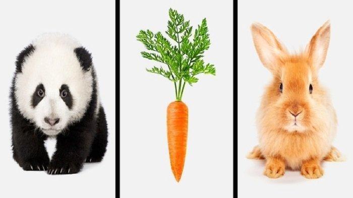Pilih Gambar Panda atau Kelinci, Jawabanmu Perlihatkan Pikiranmu Lebih ke Budaya Barat atau Timur