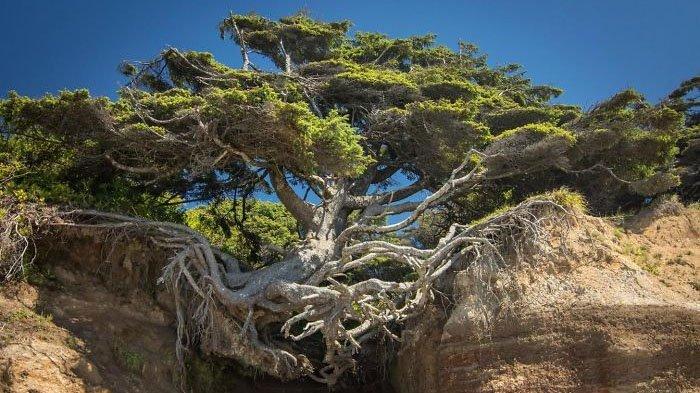 Pohon keren
