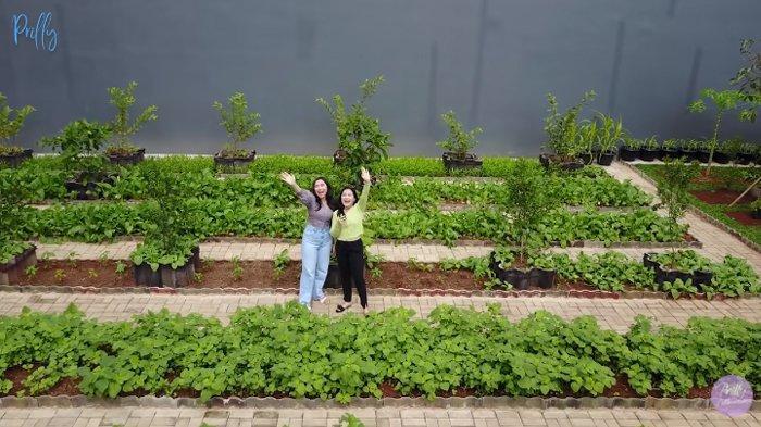 Potret kebun organik Prilly Latuconsina.