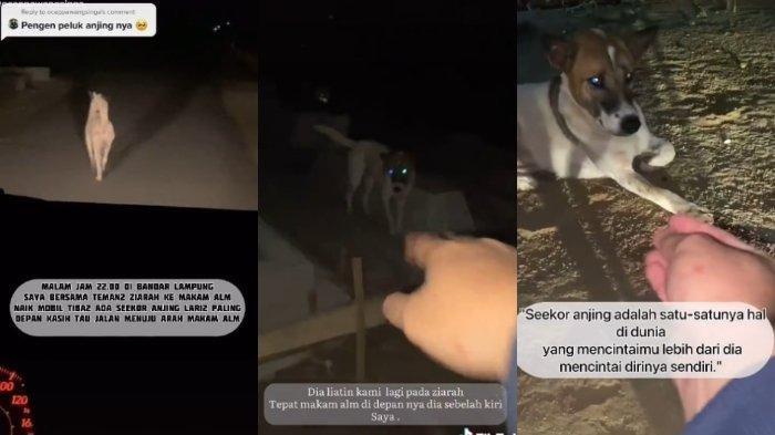 Anjing Setia Antar Peziarah ke Makam Pemiliknya, Raut Wajah Langsung Sedih saat Tiba di Kuburan