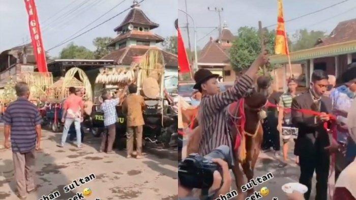 DIJULUKI Sultan Nganjuk, Pria Ini Bawa Seserahan 3 Ekor Sapi hingga Perabotan Rumah, Videonya Viral
