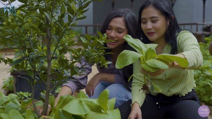 Prilly Latuconsina petik sayuran di kebunnya.