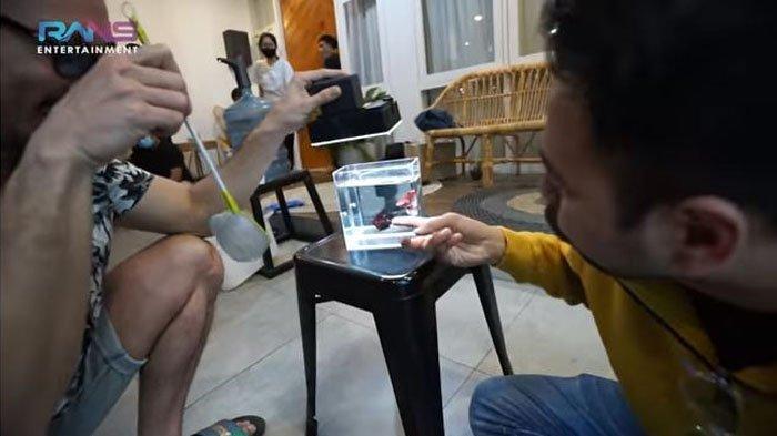 Raffi Ahmad beli ikan cupang Denny Sumargo seharga Rp 25 Juta