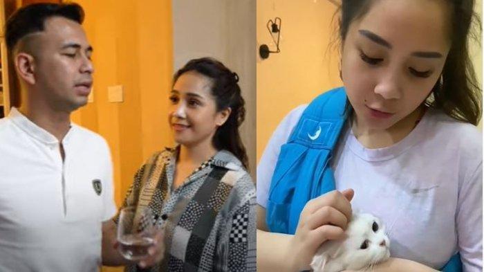Raffi Ahmad protes Nagita Slavina mau adopsi kucing lagi