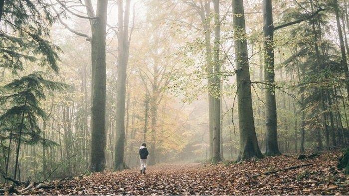 Ilustrasi berjalan / tersesat di hutan.